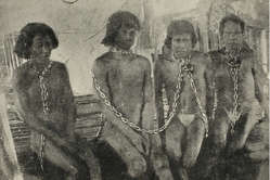 Thousands of Indians were enslaved and killed during the rubber boom.