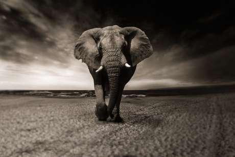 Elephant-2870777-1920_460_landscape