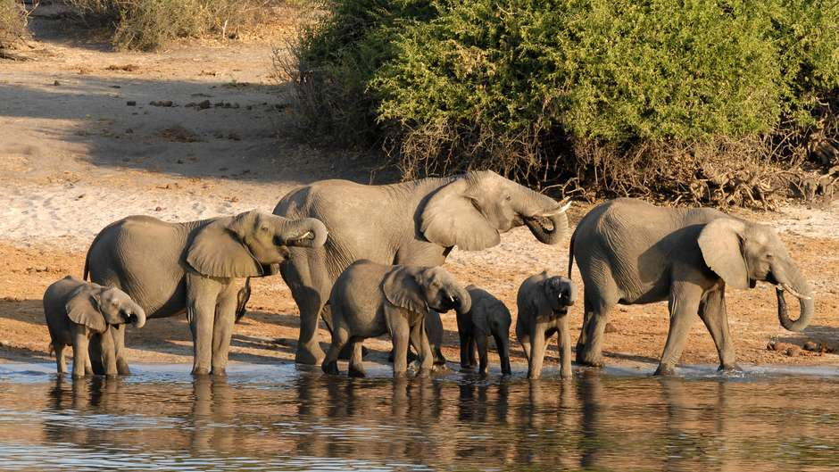Scientists in Botswana have released a statement questioning the BBC coverage of the deaths of 87 elephants in Botswana