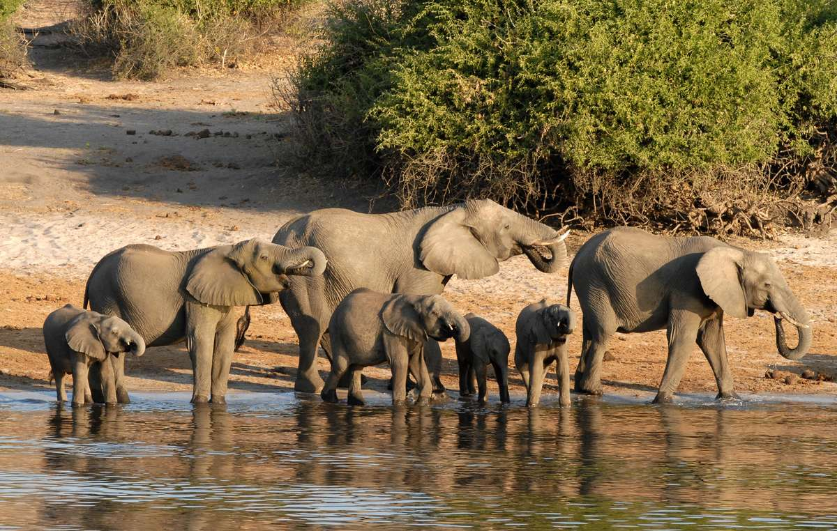 The scientists find no scientific basis for the dramatic assertion that 87 elephants have been poached in Botswana.