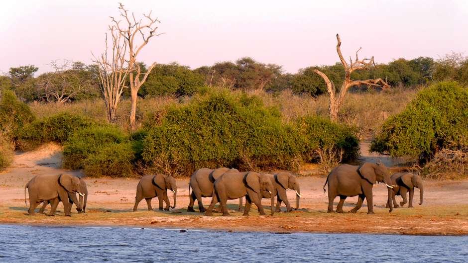 """Una investigación concluye que la noticia de la """"masacre a manos de furtivos"""" de 87 elefantes es falsa."""