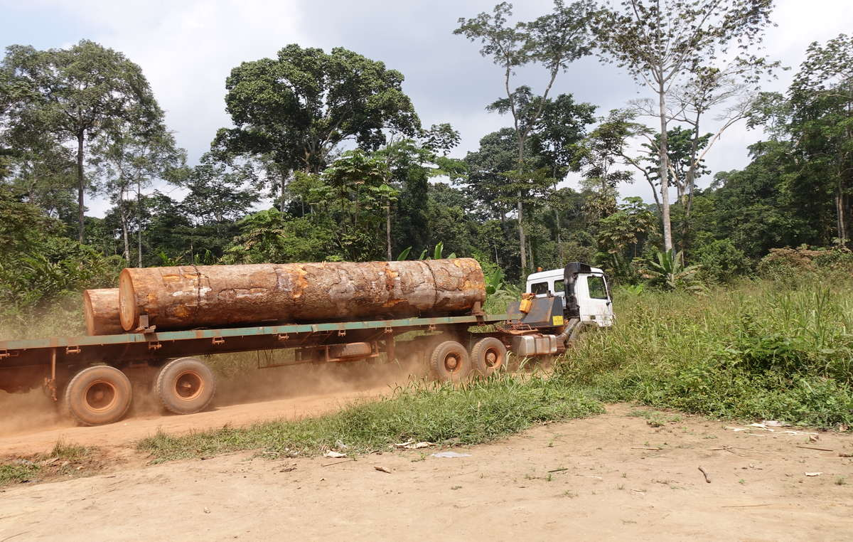 Much of the Congo rainforest is being logged. Big conservation organizations often form partnerships or agreements with logging companies.