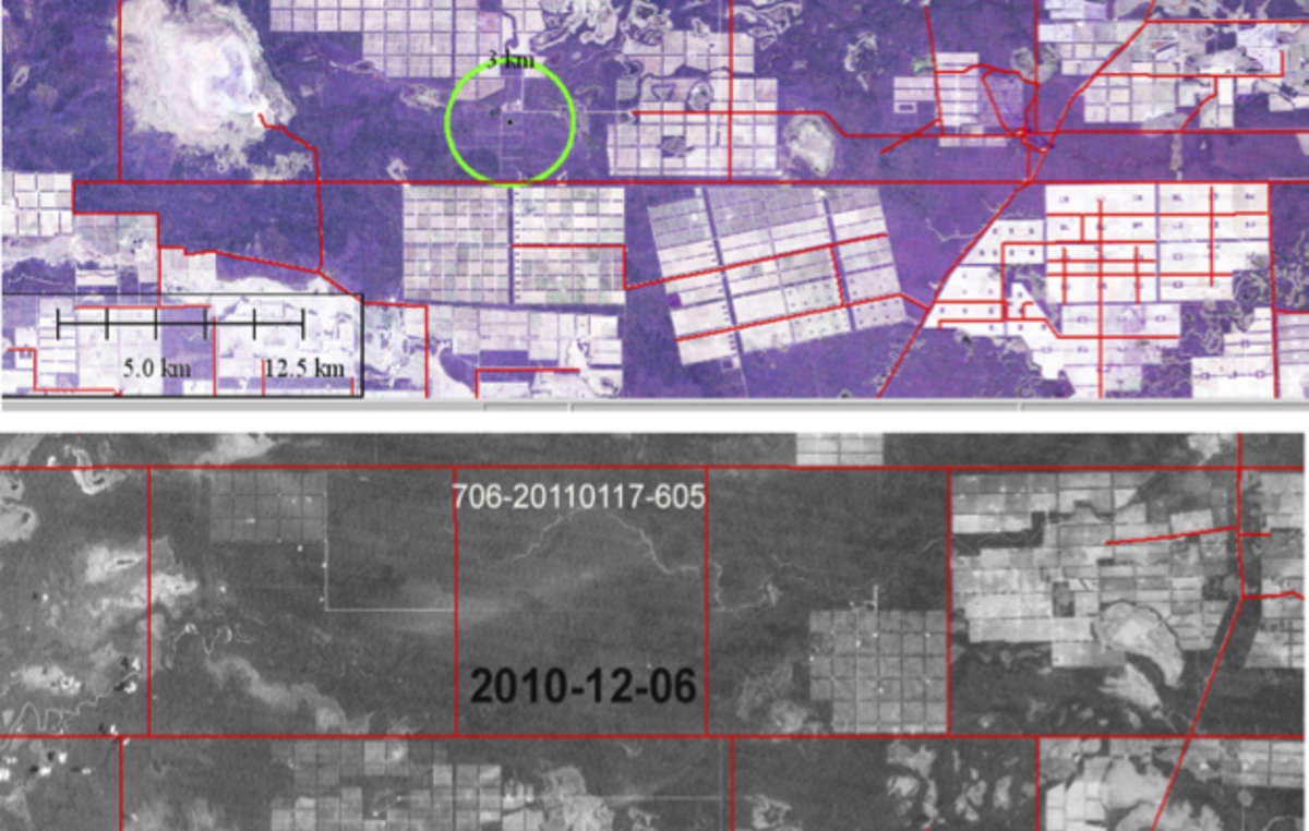 O desmatamento ilegal (círculo) de outubro- dezembro de 2010. Grande parte da floresta ao redor já foi (ilegalmente) desmatada.