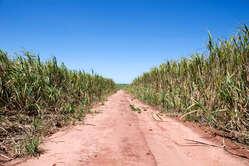 El boom de la producción de caña de azúcar se está apoderando de la tierra ancestral guaraní.