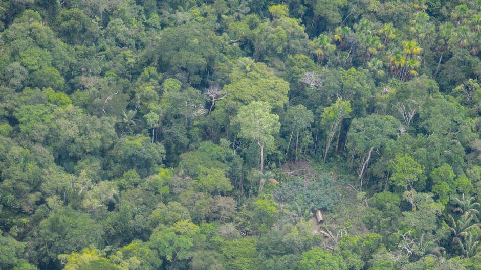 ORPIO difunde nuevas imágenes de tribu no contactada en la Amazonía peruana para demostrar su existencia.