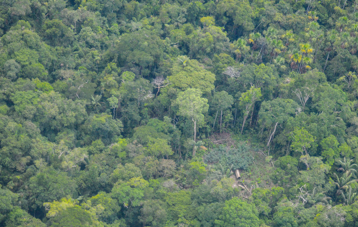 Aerial footage of an uncontacted indigenous community in the Peruvian Amazon. 2019