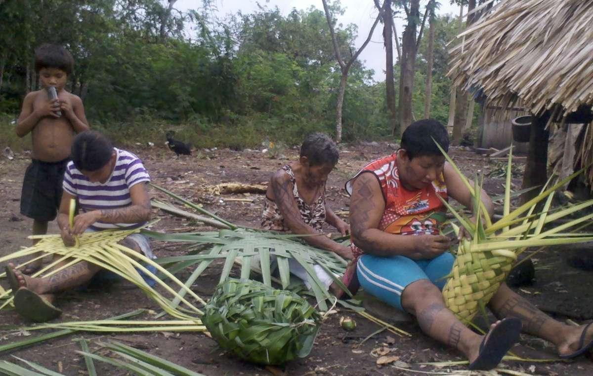 Una famiglia di Arara, territorio indigeno Cachoeira Seca, Brasile.