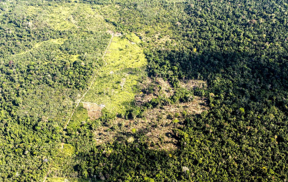 Áreas desmatadas na Terra IndígenaCachoeiraSecado Iriri (TI), Pará.