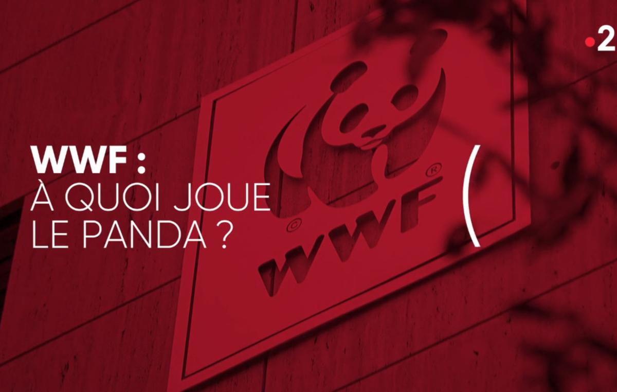 Le reportage de Complément d'enquête, diffusé le jeudi 18 février 2021, dévoile la face cachée du WWF. Capture d'écran du documentaire.