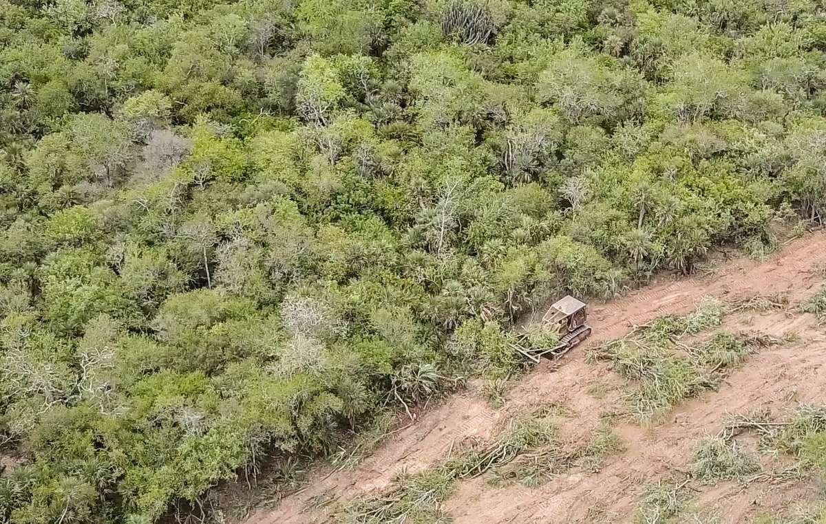 La forêt des Ayoreo est détruite au bulldozer à une vitesse phénoménale.