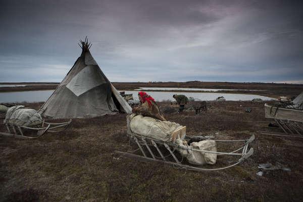 Nenet reindeer herders, Yamal Peninsula.