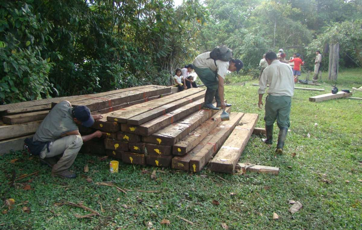 Illegally harvested wood seized during SERNANP raid in Manú National Park.
