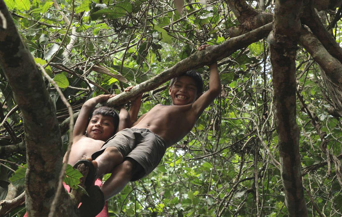 Les Awá dépendent de leurs forêts pour leur survie.