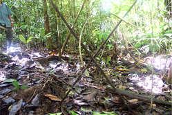 Crossed spears left by an uncontacted tribe in the region where Barrett and Repsol-YPF are working.