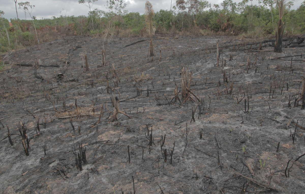 Lexpulsion des peuples indigènes de leurs terres a provoqué une déforestation massive dans le monde entier.