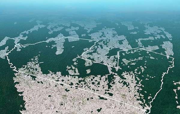 Illegale Abholzung hat seit 1985 mehr als 30% des Waldes in einem der Awá-Gebiete zerstört.