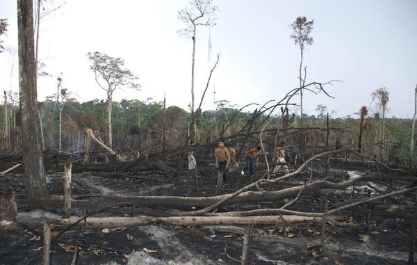 Awá walk among the burnt remains of their forest.