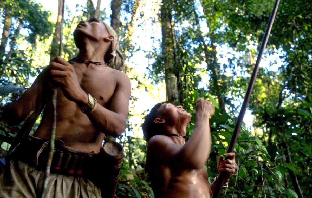 Los penanes dependen de la caza y la recolección en su selva para sobrevivir.