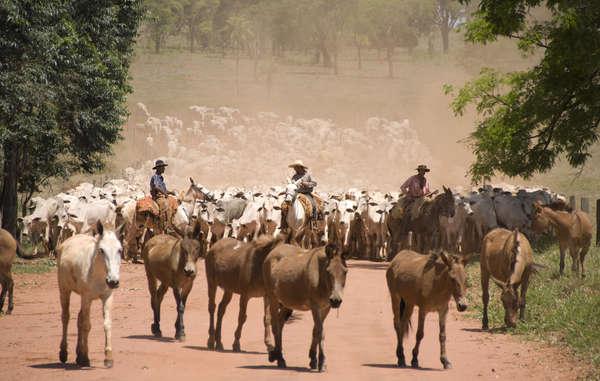Farmer streifen ungestraft durch das gestohlene Land. Sie haben Freunde in hohen Positionen.