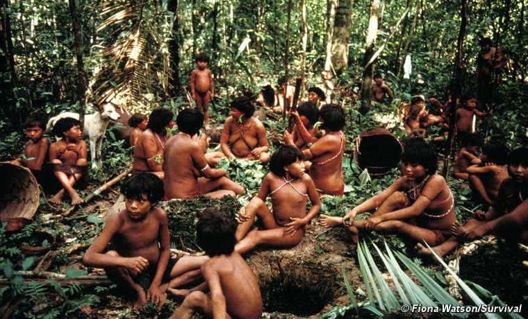 Yanomami of Demini prepare timbó poison from a vine, used to stun fish, Demini, Brazil.