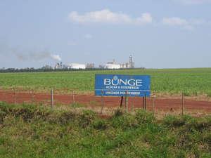Bunge está comprando caña de azúcar producida en tierras que los guaraníes reclaman como suyas.