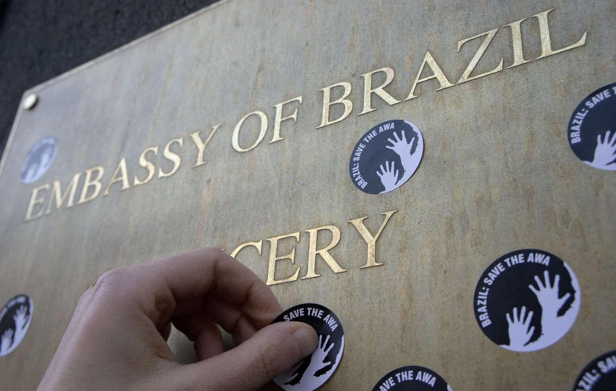 Des auto-collants au message 'Brazil : Save the Awá' (Brésil : sauvez les Awá) seront distribués lors des manifestations de Survival.
