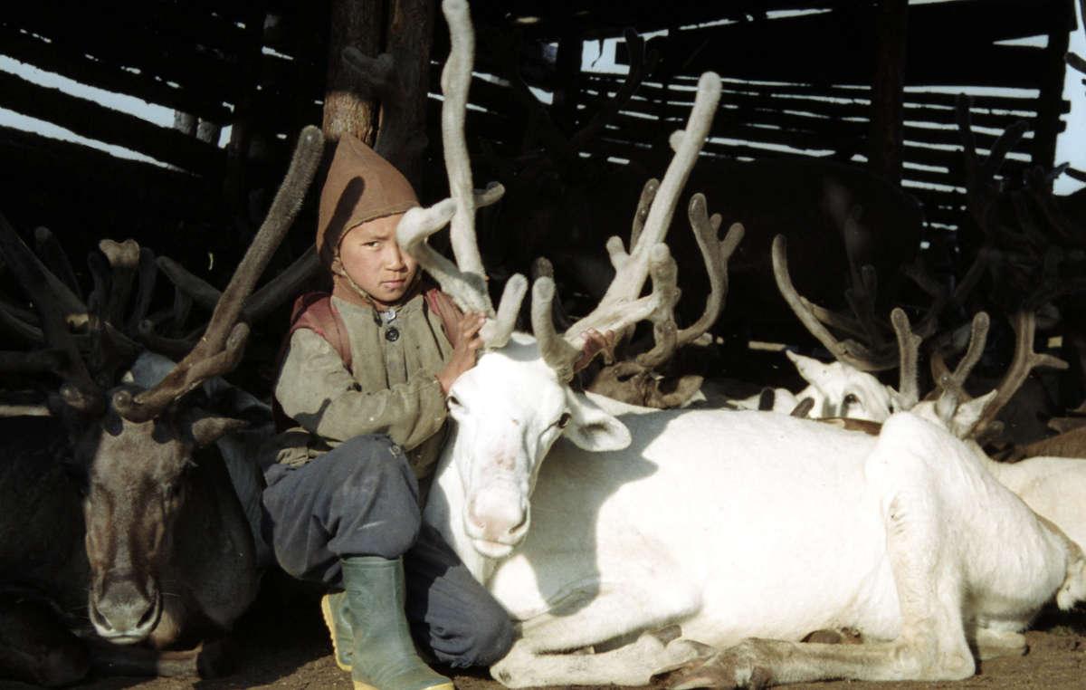 An Evenk boy with reindeer in Siberia.