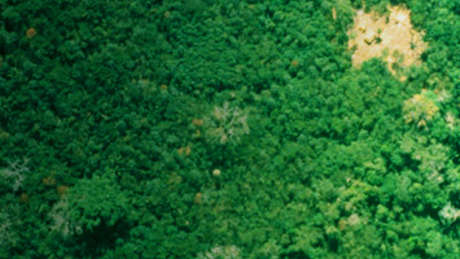 Uncontacted tribes notext 460 wide