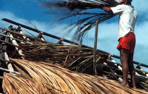Techando con ramas de buriti, Serra do Sol, Brasil.