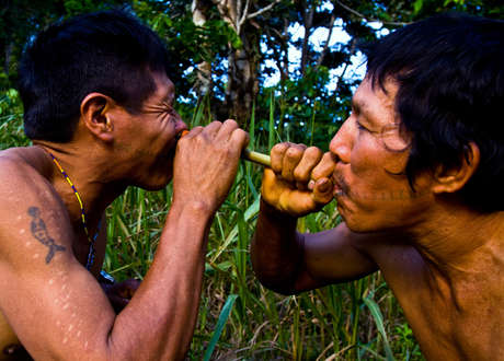 A Matsés man receives potent tobacco snuff up his nose. It hurts, but its effective: the mens strength and energy are improved.