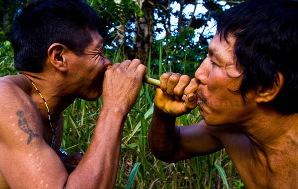 Two Matsés men inhale potent tobacco snuff. The cuts on the man's arm indicate where frog poison has been applied – a traditional Matsés practice to aid hunting skills.