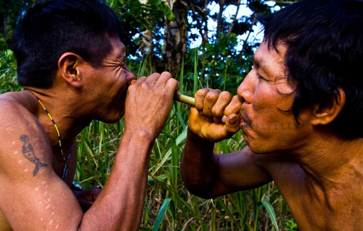 Two Matsés men inhale potent tobacco snuff. The cuts on the mans arm indicate where frog poison has been applied – a traditional Matsés practice to aid hunting skills.