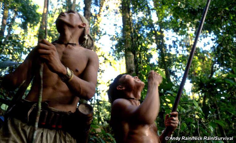 Penan a caccia nella foresta. Sarawak.