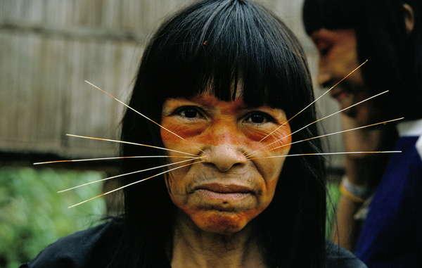 Os Matsés dependem e cuidam de uma grande área da Fronteira Isolada Amazônica há gerações.