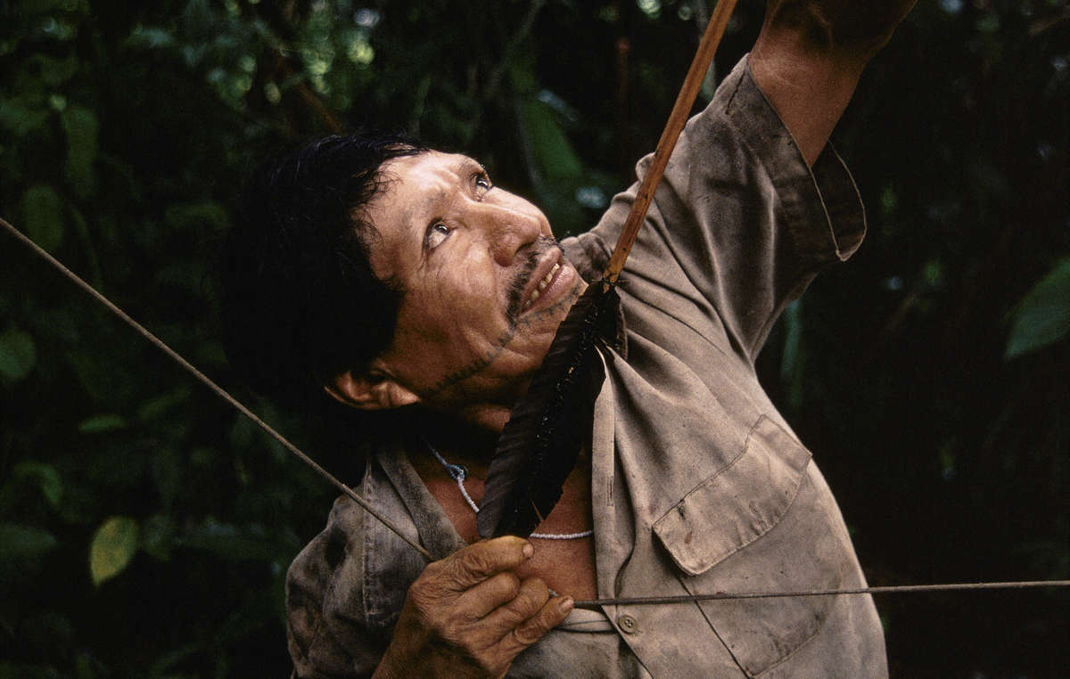 The Matsés have lived by hunting and gathering in the Amazon Uncontacted Frontier for generations.