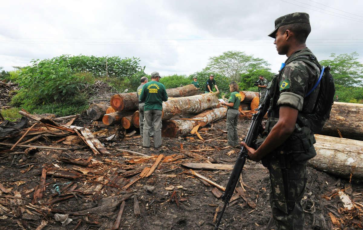 Larmée brésilienne a lancé une opération denvergure contre lexploitation illégale forestière près des terres awá