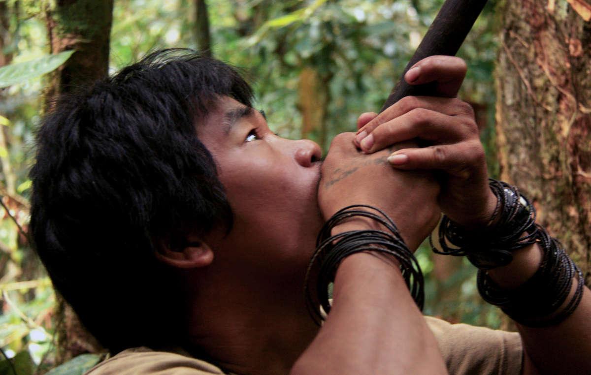 Les Penan dépendent de la forêt pour chasser et pratiquer la cueillette. Le barrage de Baram aurait inondé 388 km2 de forêt.