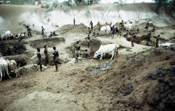 In der Trockenzeit graben die Nyangatom, Mursi und andere Völker tiefe Löcher im Flussbett, um ihr Vieh zu versorgen und Trinkwasser zu gewinnen.
