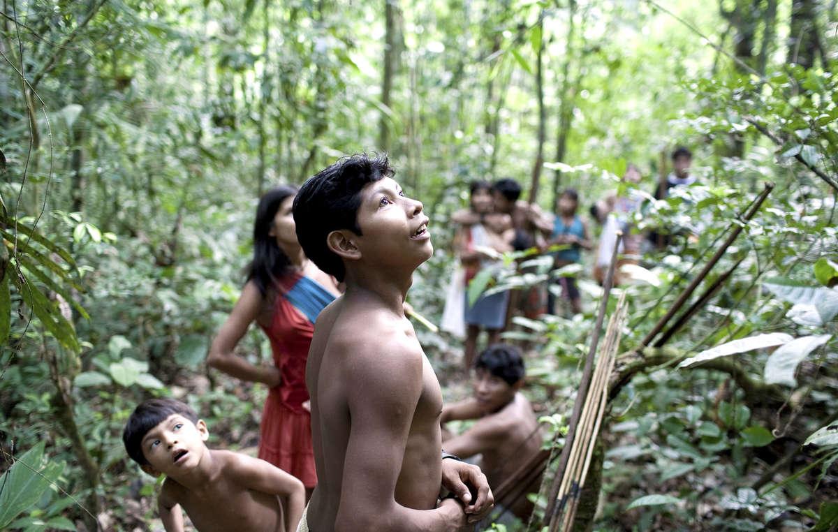 Les Awá sont lune des dernières tribus de chasseurs-cueilleurs nomades dAmazonie. Ils dépendent de la forêt pour leur survie.