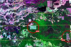 Des images satellite révèlent l'ampleur de la déforestation illégale.