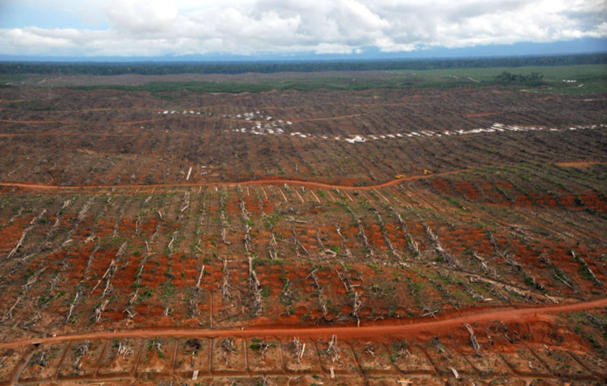 Una foresta recentemente disboscata a favore delle piantagioni di palma da olio. Provincia di Loreto, Perù settentrionale.