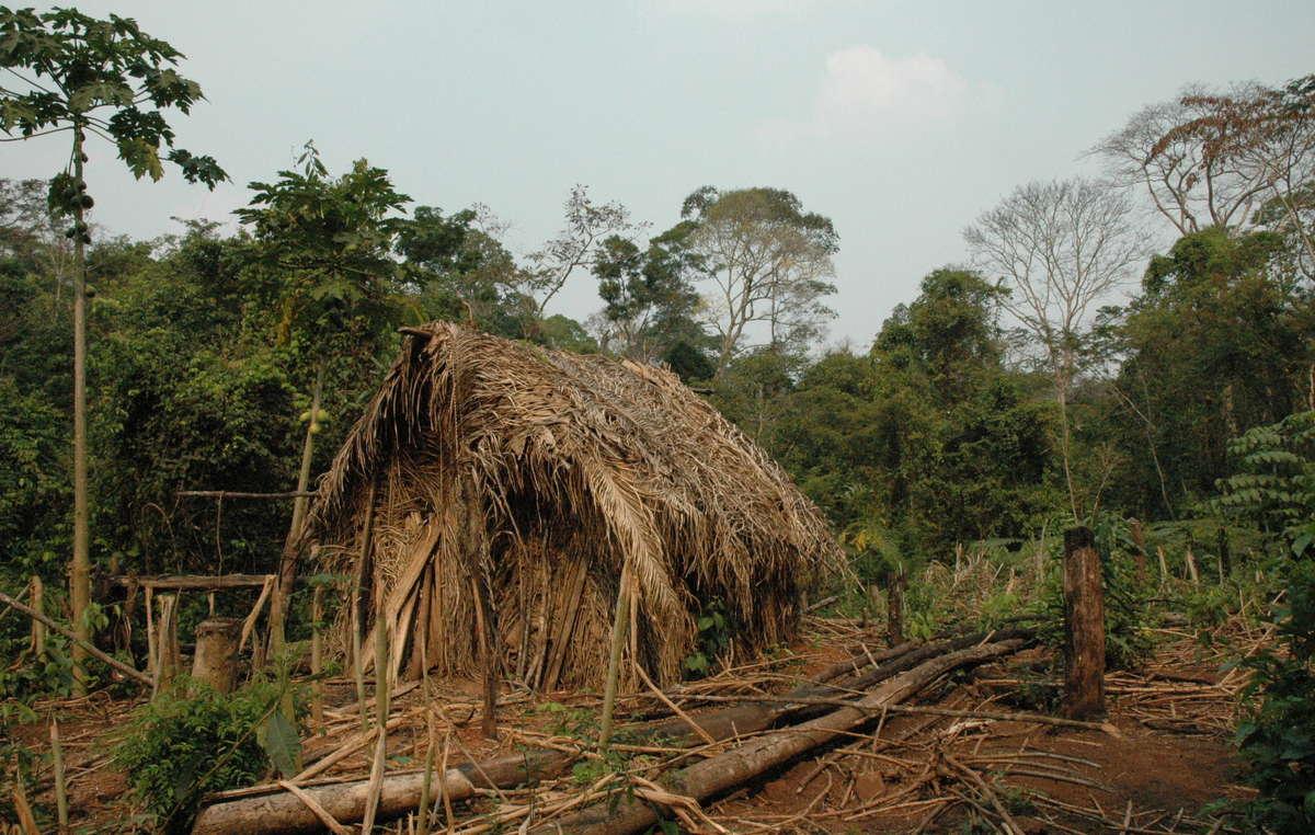 La choza y el huerto del Último de su Tribu, con cultivos de mandioca y otros vegetales. Se sabe muy poco de este indígena no contactado. Vive solo en un pedazo de selva, rodeado de ranchos de ganado y plantaciones de soja en el estado brasileño de Rondonia.