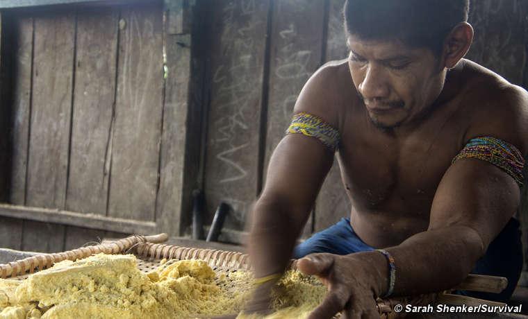 Un uomo awá prepara la manioca.
