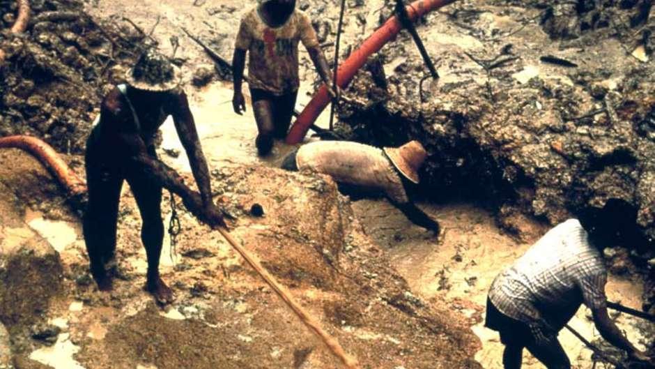 Bis zu 10.000 Goldsucher sind in das Land der Yanomami im Norden Brasiliens eingedrungen.