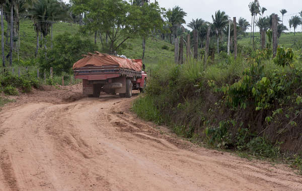Following Survival's campaign, a government operation has removed most loggers and settlers from the key Awá territory, but logging continues in other territories where they live.