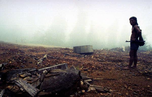 Die Wälder der Penan wurden von Holzfällern zerstört.