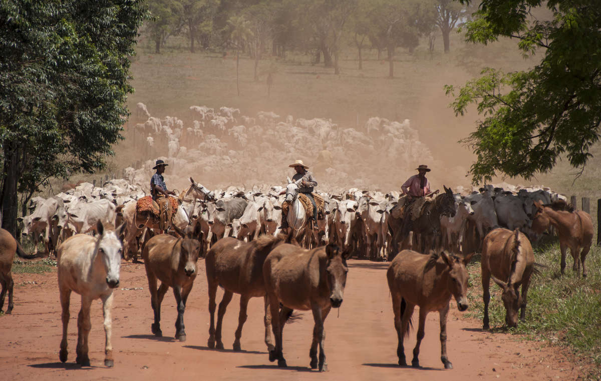 Much of the Guarani's land has been taken over by cattle ranchers who employ gunmen to force the Guarani out.