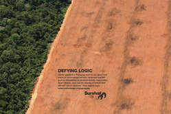 Survival has launched a global ad campaign in support of the Ayoreo.