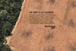 Survival lance une campagne de publicité internationale en faveur des Ayoreo.