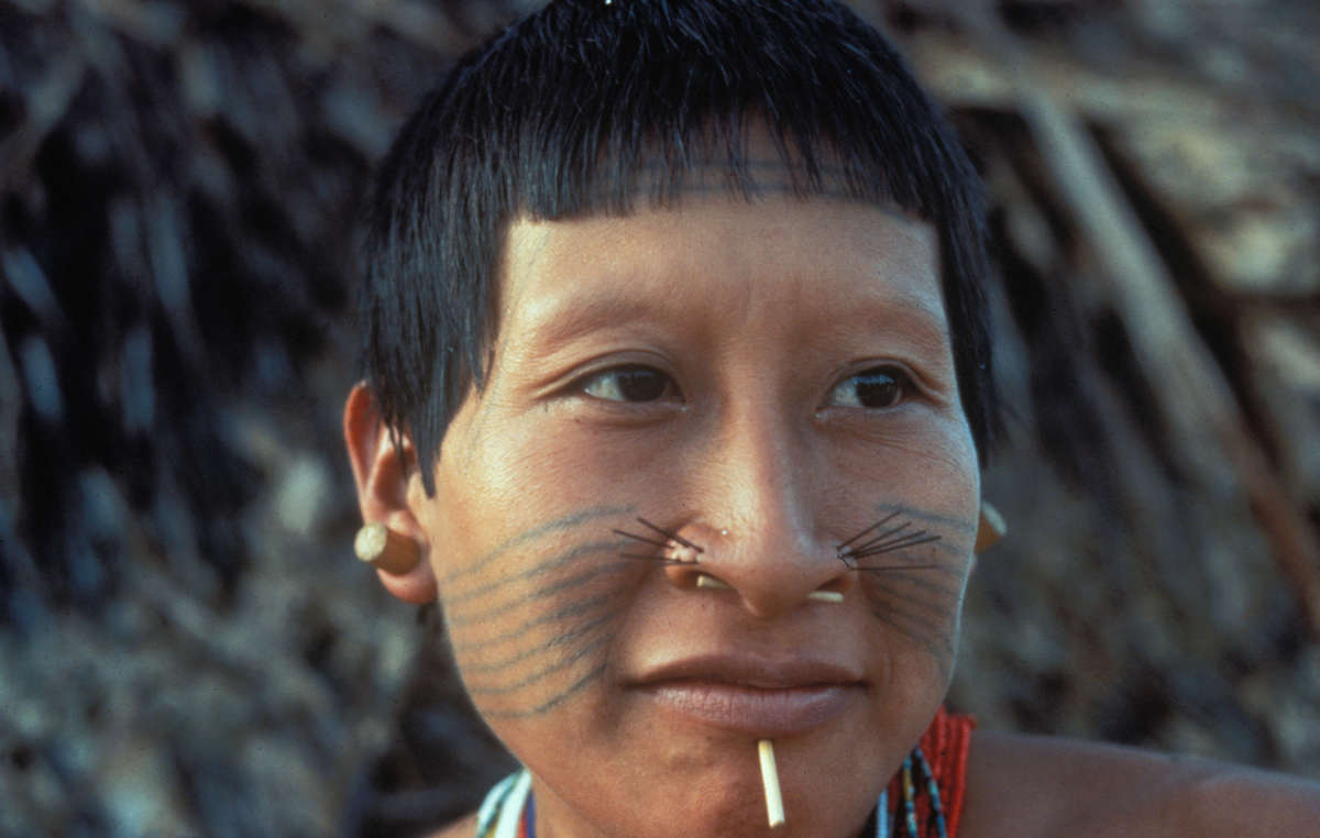 Tupá, a Matis woman, near the Itui river in the Javari Valley, Brazil. The Matis were devastated by western diseases after they were first contacted in the 1970s. Over half of the Matis died in the year following contact. Their numbers have risen from a low of 87 to around 500 today, but the Brazilian government is not doing enough to protect their health.